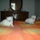 cuccioli2006