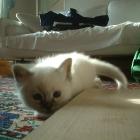 cuccioli2007_c3