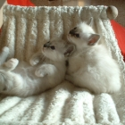 cuccioli2007_c5
