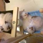 cuccioli-rugi-2012-161