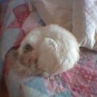 minu-che-dorme